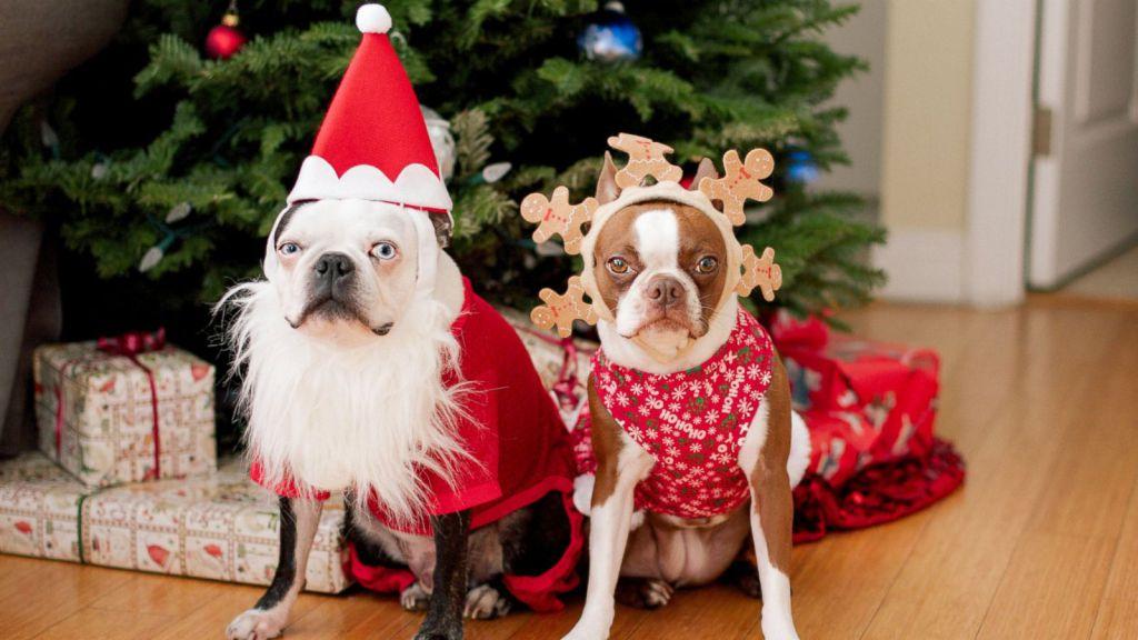 Idei Cadouri de Crăciun pentru Câini și Pisici